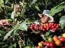 Una perreta de la ANAP por ventas de café autorizadas por EEUU