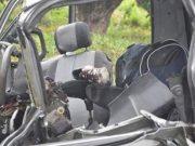 Tragedia en la carretera: Un muerto y nueve heridos por accidente en Granma